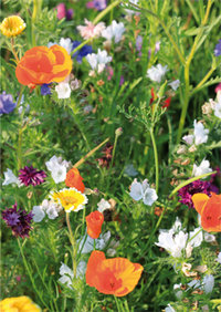 "Greeting card ""Summerly meadow"""