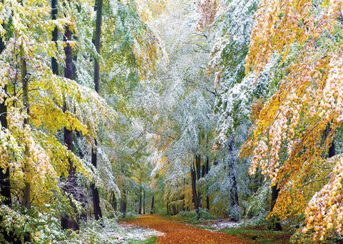 "Greeting card ""onset of winter in beech forest"""